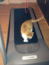 Cat on the treadmill