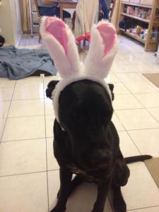 Eli_bunny