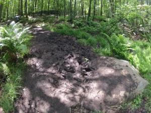 "Mud + huge rock = ""fun"". This was a tiny rock compared to others on the Red Loop."